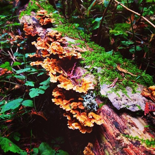 Fungusssss